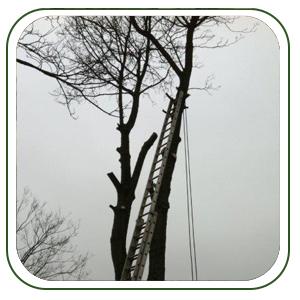 treework1
